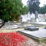 14th-may-in-the-cemetery-2_640x480